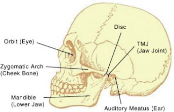 Skull showing the TMJ (Jaw Joint) as an example of TMD (temporomandibular joint dysfunction / disorder)
